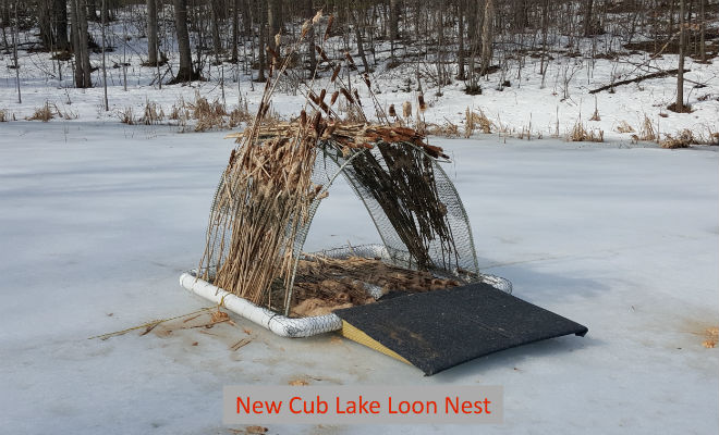 pic-loon-nest